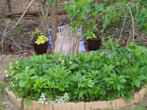Stump garden in April