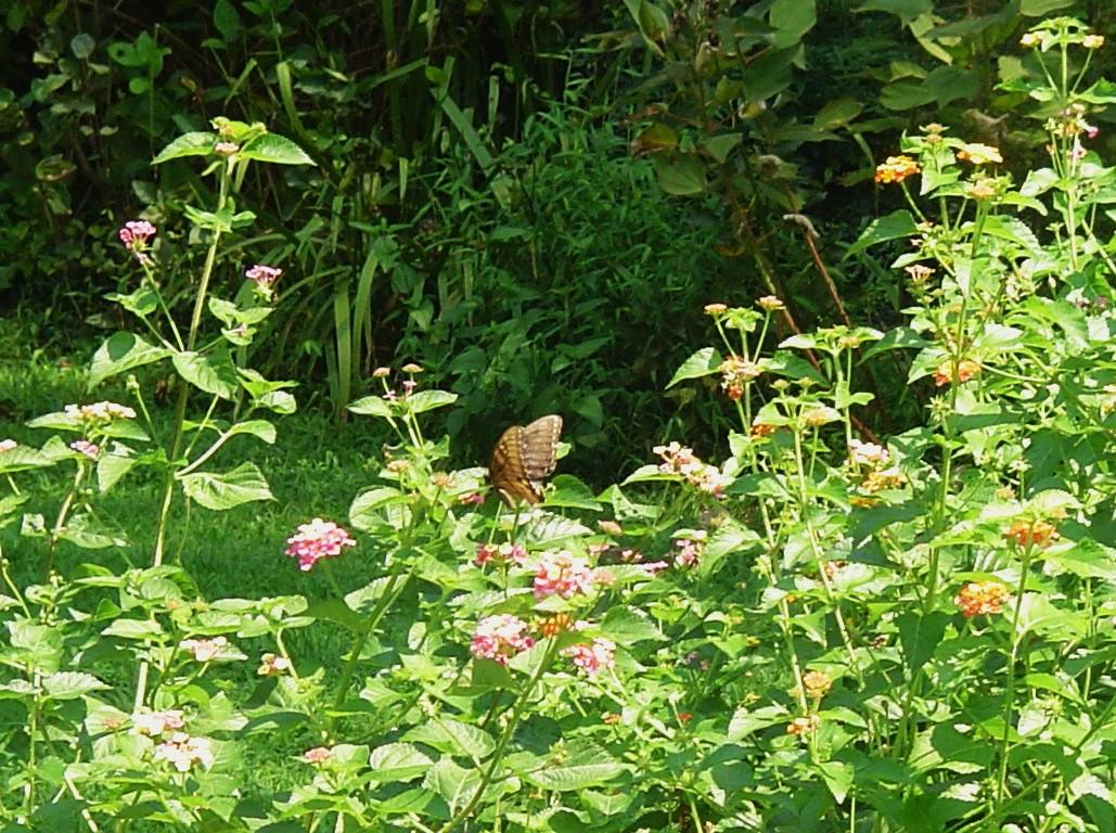 Hummingbird And Butterfly Garden Forest Garden