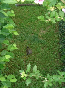 A large box turtle visits each summer.