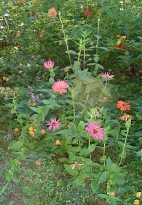 Zinnias and Lantana feed hummingbirds and butterflies, but are ignored by the deer.