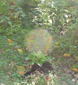 Garden Oct. 21, 2012 026