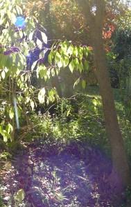 Garden Oct. 21, 2012 027