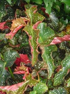 July 30 2013  Foliage 004