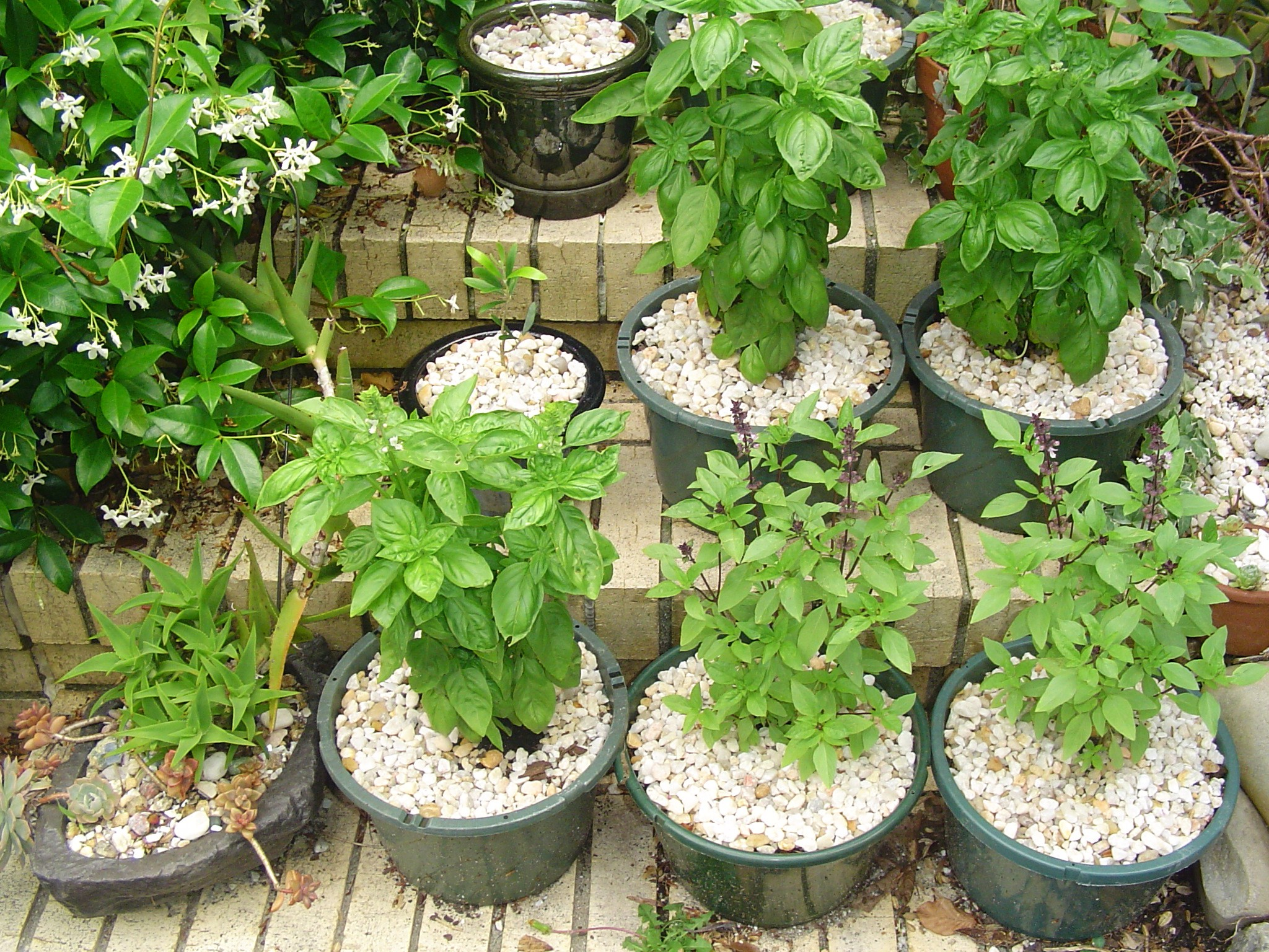 Gardening in Raised Beds and Containers Forest Garden