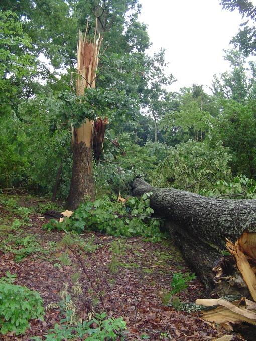 June 13 storm damaged trees 004