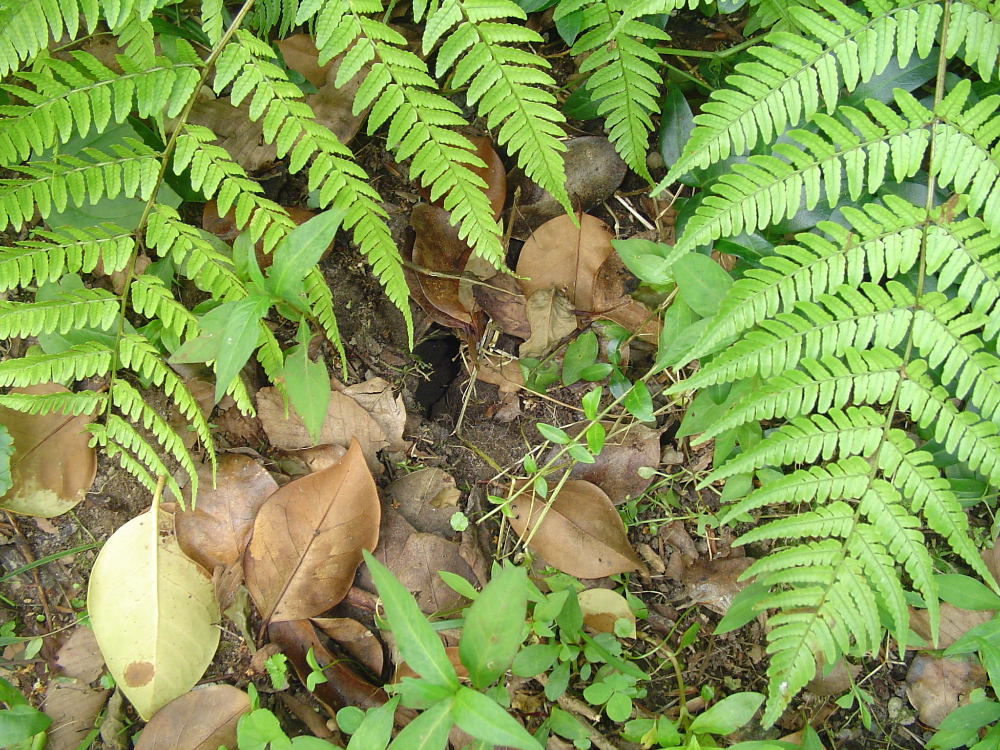The Voles Love To Tunnel Under Newly Planted Areas To Feast On The Roots Of  Plants