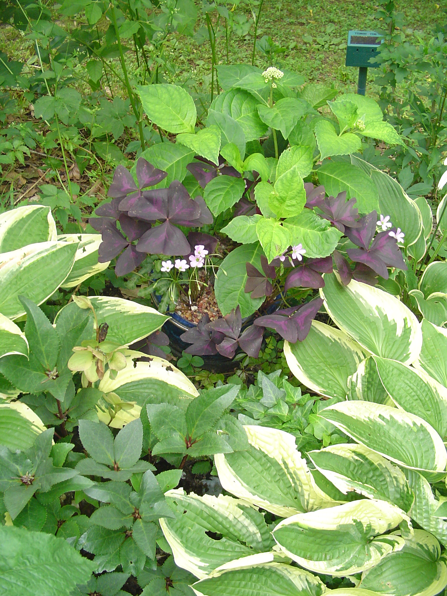 Image Result For Home And Garden Centera