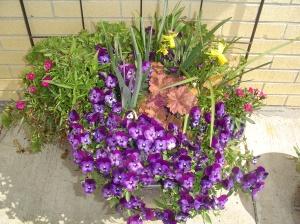 Spring garden pots
