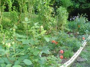 Butterfly garden in May.