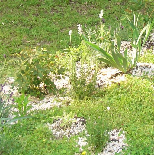 "Use pea gravel in the ""back-fill"" soil under and around new plantings, and then mulch around the new plant with pea grave. This discourages moles and voles from eating the roots of your new plant, and discourages squirrels from digging around it. Herbs benefit from the reflected heat and sunlight, and the soil is held in place on a slope."
