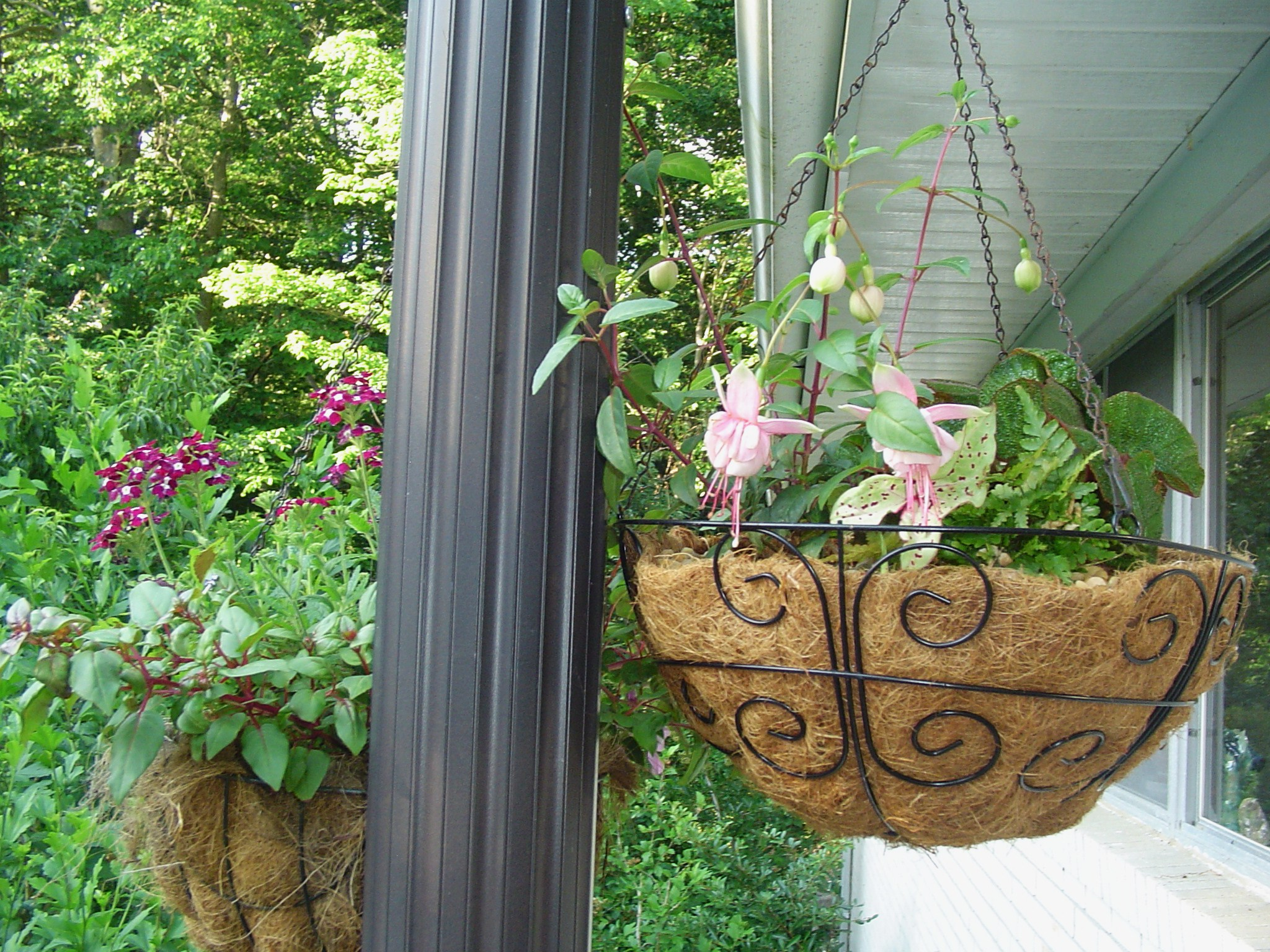 Flowers For Hanging Baskets That Attract Hummingbirds : Hummingbird and butterfly garden forest
