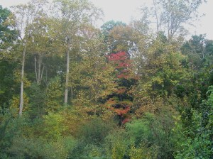 the ravine in fall