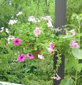 A hanging basket of petunias and geraniums draws butterflies to this deck garden.