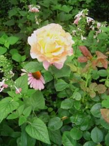 July 11 2013 garden 020