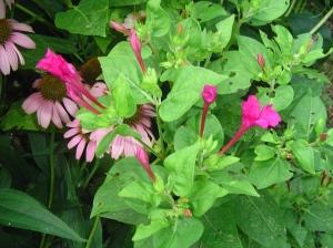 July 20 garden photos 005