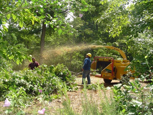 Arborists grinding pruned branches to return them to the forest as a thick mulch.