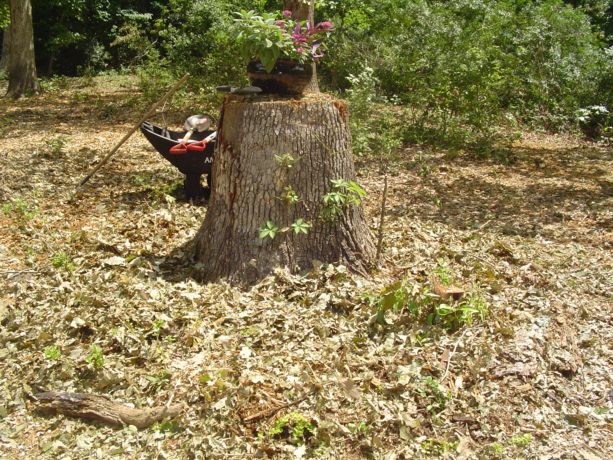 Chipped up wood and leaves spread over the foundation of wood will rot into good compost over time.