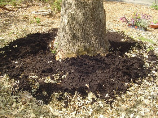 This is a very thin layer of compost, but I'll keep adding more over the next several weeks.