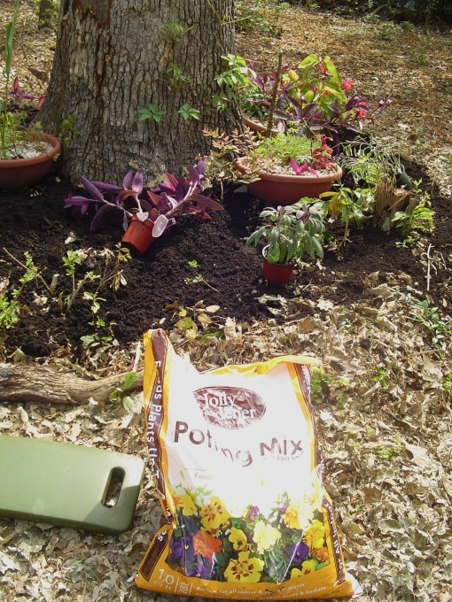 All of the new plants are laid out where they will grow. Potting mix will help the plants get started in this shallow bed.