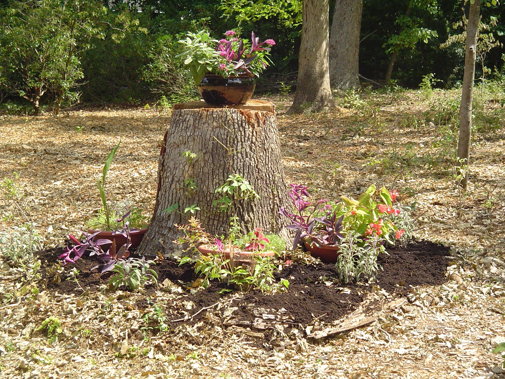 Raised Garden Beds | Forest Garden