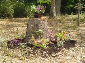 July 27 new stump garden 016