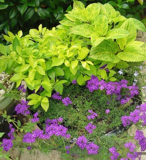 July 30 2013  Foliage 001
