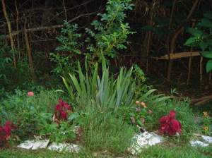 Another stump garden with iris, a Rugosa rose, thyme, Lantana, Lavender, and coleus.