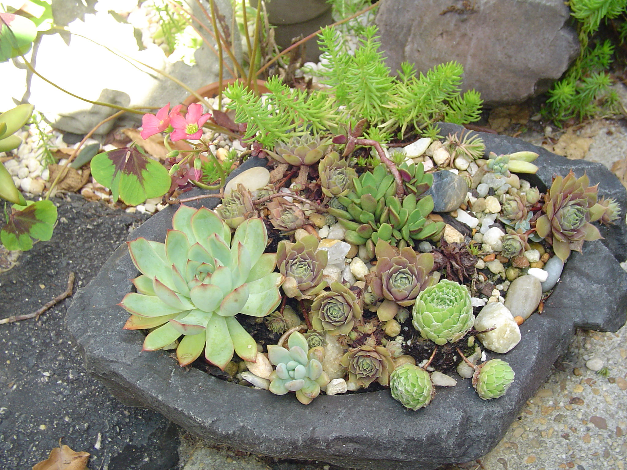 Potting up forest garden succulent garden workwithnaturefo