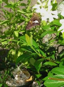 July 7 2013 succulents 022
