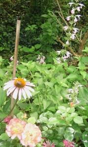 bee in the butterfly garden