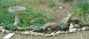 This raised bed garden is edged with chunks of rock and cement.