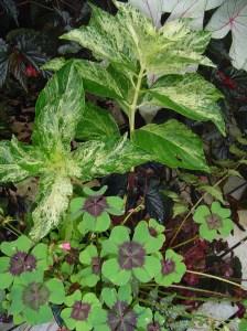 August 1 2013 rain soaked garden 005