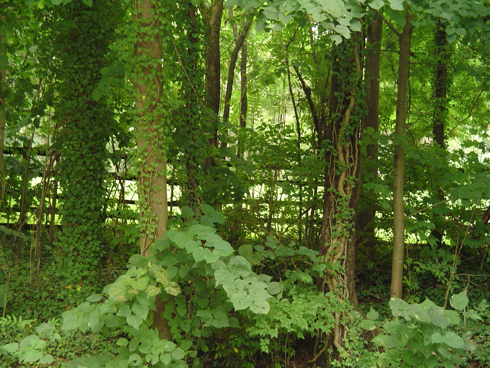 how to grow plants in garden the forest