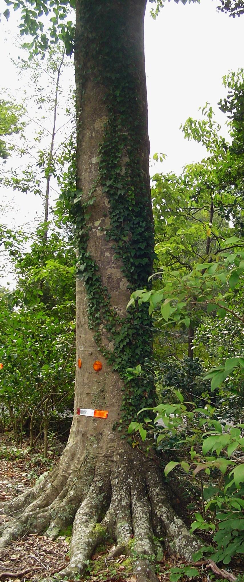 Bind Weed Forest Garden