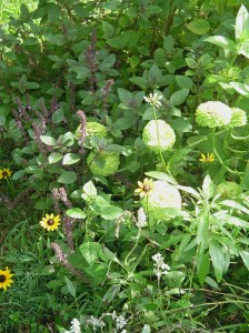 August 21, 2013 close up garden 009