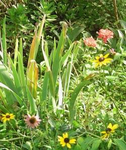 August 21, 2013 close up garden 018