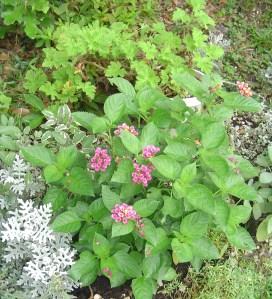 August 21 2013 garden photos 019
