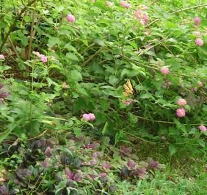 August 21 2013 garden photos 020