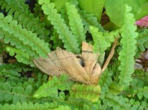 moth 003
