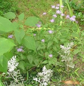 August 28 2013 garden 022