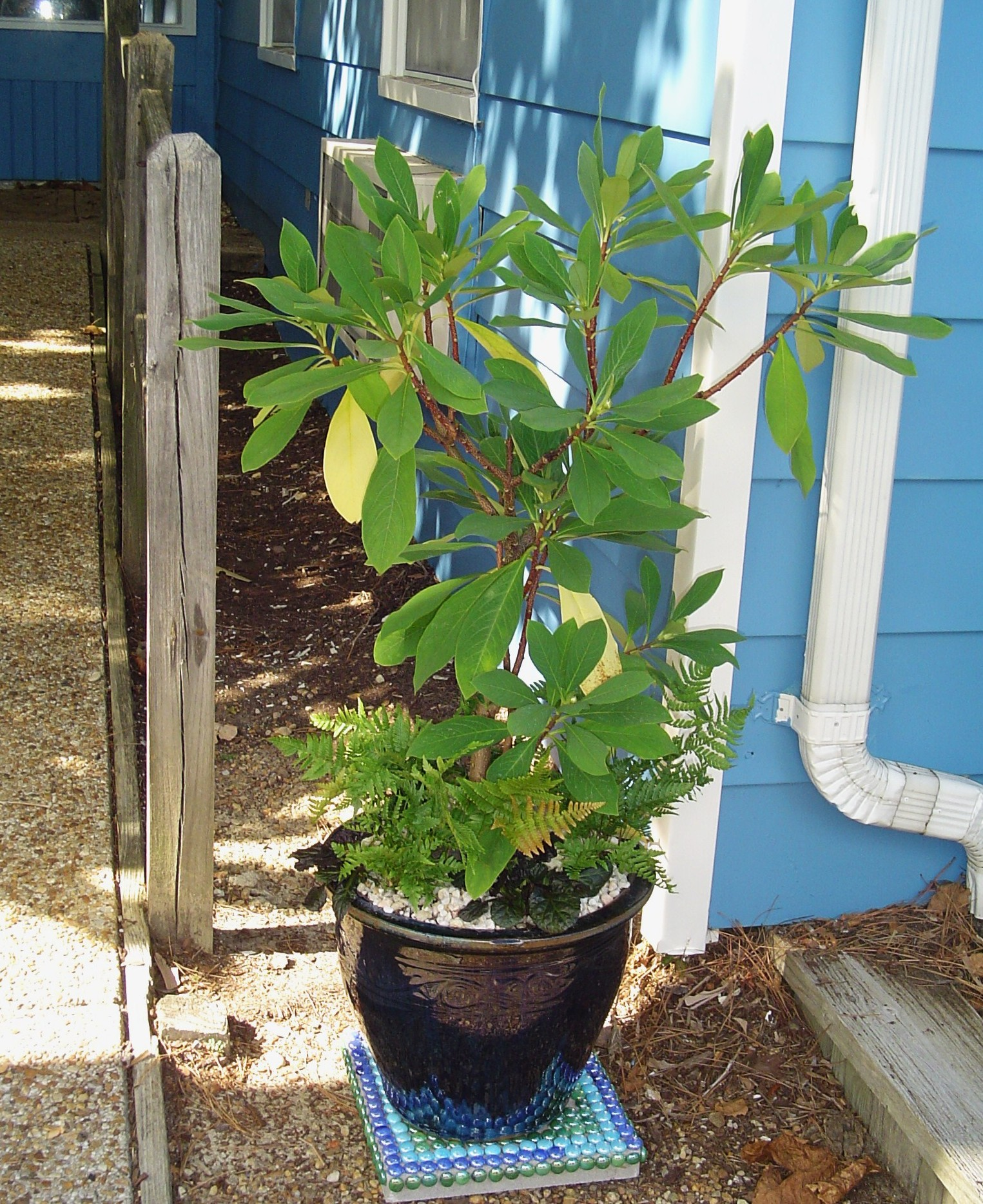 Potted Garden Potted garden forest garden sept 17 2013 this century planting 005 a potted garden workwithnaturefo