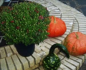 Sept 24 2013 pumpkins 003