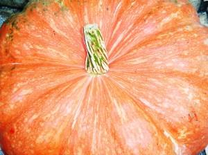 Sept 24 2013 pumpkins 006