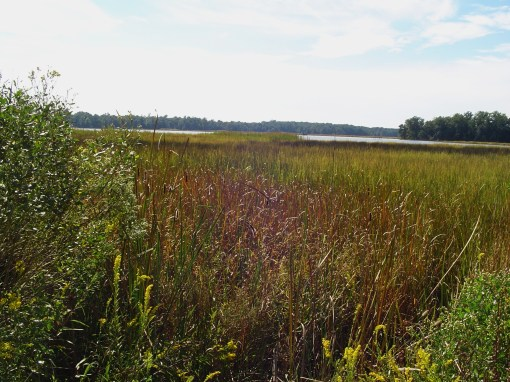 College Creek, near Jamestown.