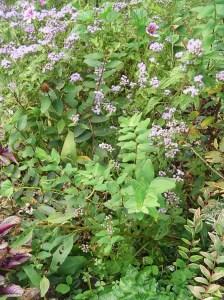 Sept 29 2013 garden 017