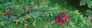 September 12. 2013 beauty berry 015