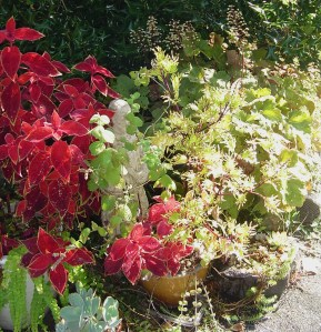 September 12. 2013 beauty berry 022