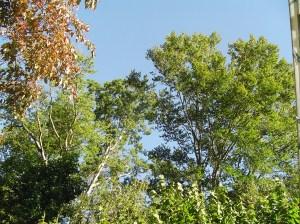 September 24 2013 garden 034