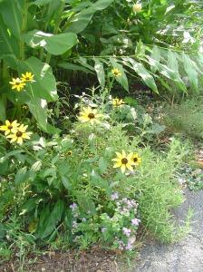 September 3, 2013 garden 026
