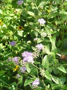 September 7 garden 022